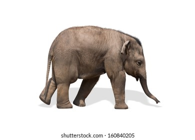 Baby elephant isolated on white. Clipping path included.