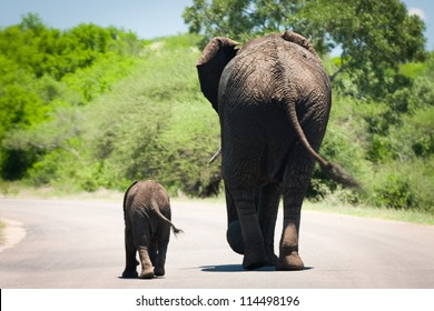 baby elephant and it's mama walking in sync