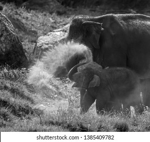 Baby Elephant with Mom in Kanha National Park India