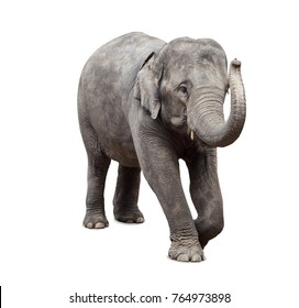 Baby elephant on white background