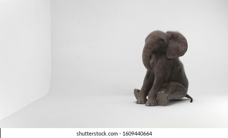 baby elephant sitting in white room