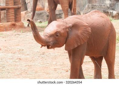 baby elephant standing between the big legs of her mother