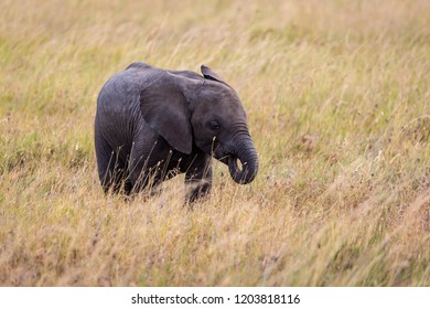 Baby elephant sucking it's trunk like a baby sucking it's thumb