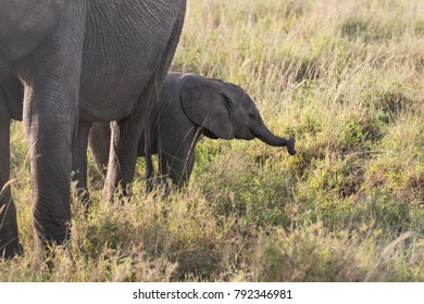 Baby elephant trying to get the grass by it's proboscis