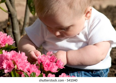a baby examining flowers