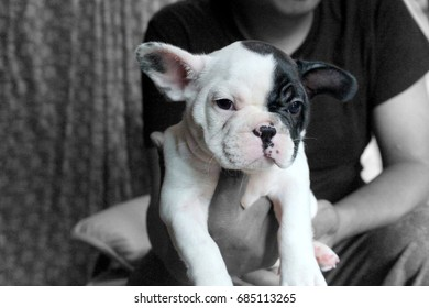 Baby French Bulldog make face like to be lazy in soft focus