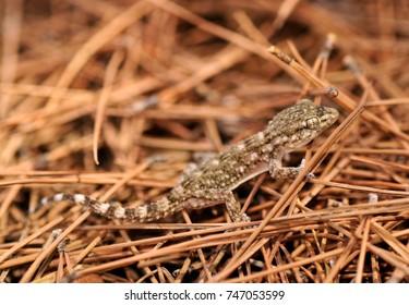 baby gecko in spain