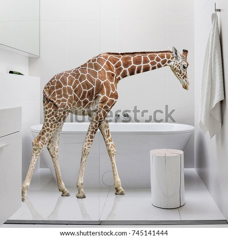 Baby Giraffe In The Bathroom For Commercial