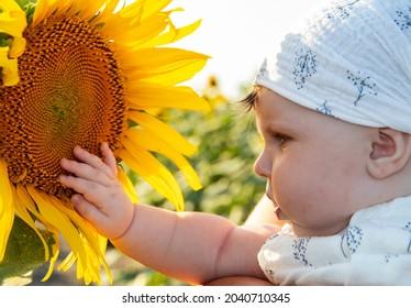 bébé fille de cinq mois regarde de près un tournesol et le touche de sa main