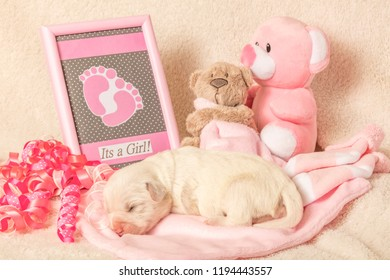 Baby Girl Newborn Puppy with pink suggestions