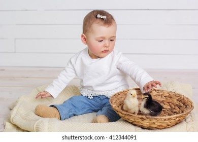 Baby girl is playing with chicks in basket