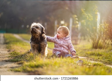 Baby girl playing with her dog