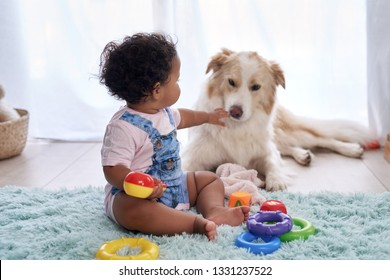 Baby girl sitting on floor playing with family pet dog, child friendly border collie