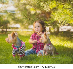 Baby girl and two yorkshire terrier