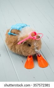 A baby guinea pig is all set with scuba gear to go snorkeling and have fun. Set on a simple wooden, vertical background this would be great for invitations or many other ideas and concepts.