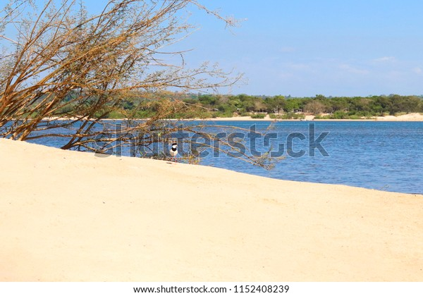 A baby gull in the sand, in the background a river and trees.