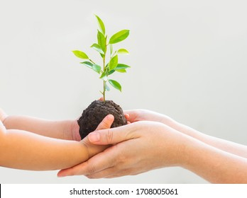 baby Hand and Mom hand holding young plant on bright background for World Environment Day concept.