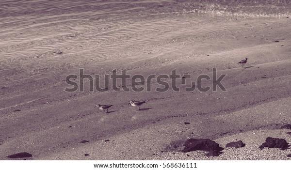 Baby Herons on the beach fishing