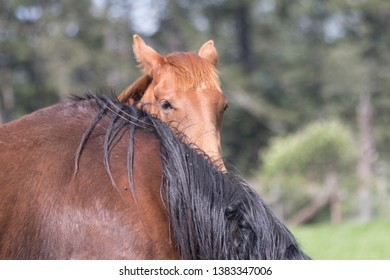 Baby Horse Colt Peeks Over Mother Horse