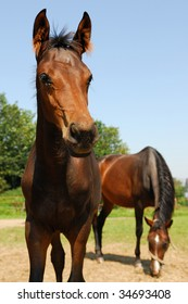 baby horse and mather