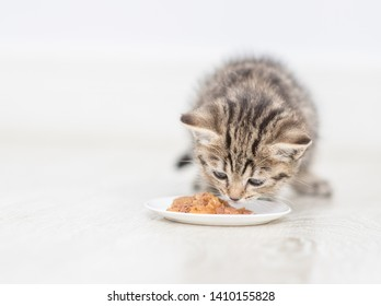 Baby kitten eating food from a plate at home. Empty space for text
