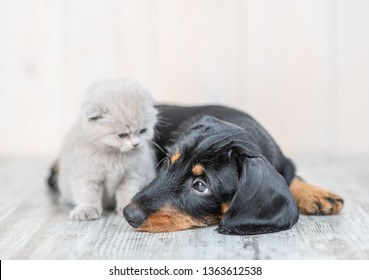 Baby kitten with sad dachshund puppy on the floor at home
