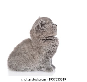 Baby kitten sits and looks away and up on empty space. isolated on white background