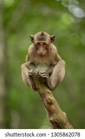 Baby long-tailed macaque on stump hunching shoulders