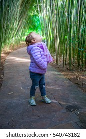 Baby up looking up in a bamboo forrest