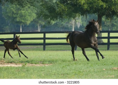 Baby and Mare Horse Equine series 61