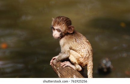 Baby monkey on the tree