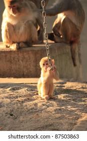 baby monkey playing