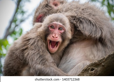 Baby monkey sitting on the tree hugging mother and smiling