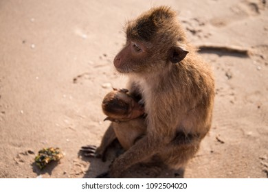 The baby monkey, sound asleep, hang tightly to the mother monkey on the beach