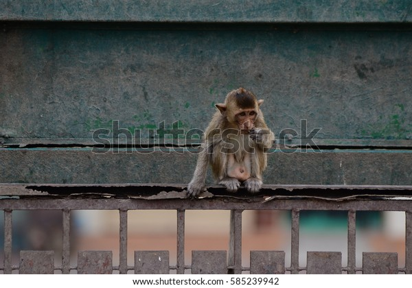 Baby monkeys are curious,Lopburi, Thailand.
