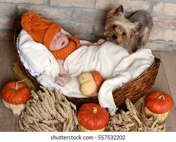 Baby in orange hat and scarf lying in a wicker basket. Yorkshire terrier sitting there. Around the basket laid out pumpkins and ears of wheat.