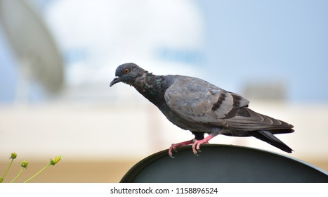 baby pigeon on antenna