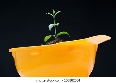 Baby plant  growing in a yellow headwear