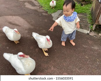 Baby playing with birds in the park