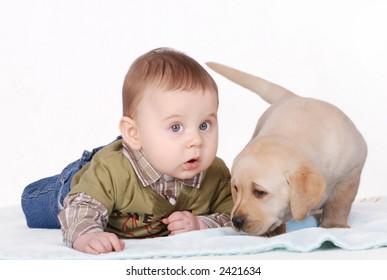 baby puppy images stock photos vectors shutterstock