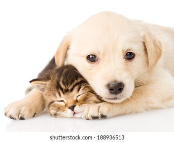baby puppy dog and little kitten together. isolated on white background