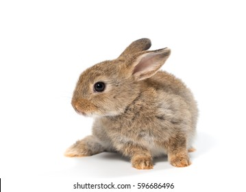 Baby rabbit adorable brown bunny on white background