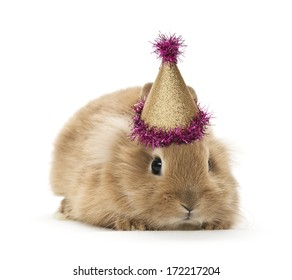 a baby rabbit with a birthday hat white background