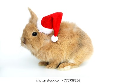 Baby rabbit with a christmas hat on the white background