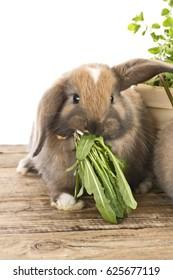 baby rabbit with fresh herbs
