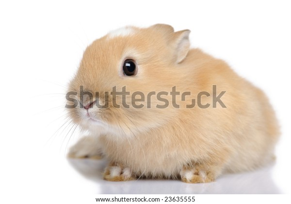 baby Rabbit in front of a white background