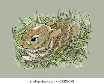 A baby rabbit hiding in the grass.