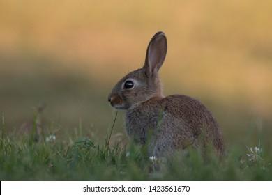 Rabbit Burrow Images, Stock Photos & Vectors | Shutterstock
