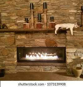 Baby, Really Cute Rare Breed White Calico Kitten Relaxing and Enjoying the Warmth of Roaring Fire While Resting on Top of Large Stone Fireplace Mantle; Cozy, Relaxing, Pets, Cats Are Funny; Adopt Me