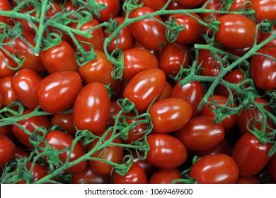 Baby San Marzano Tomatoes